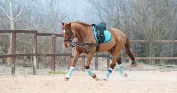 Research review – Regenerative medicine for equine musculoskeletal diseases