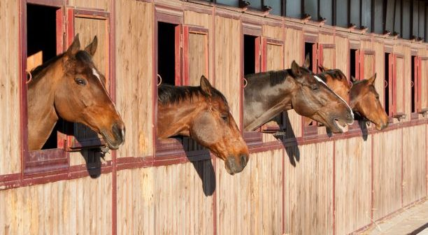Don't miss this week's webinar: The stabled horse – can we do it better?