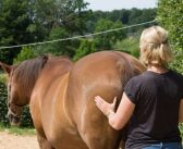 Which therapist and why? Equine musculoskeletal practitioners explained, by Dr Gillian Tabor
