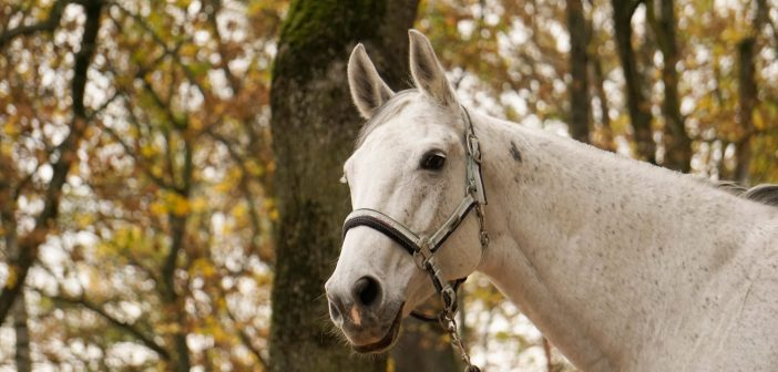 Recently published with a focus on headcollar safety – Opening forces or failure of commercially available equine headcollars and other safety devices