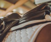 Webinar replay – Saddle Pads, by Dr Russell MacKechnie-Guire